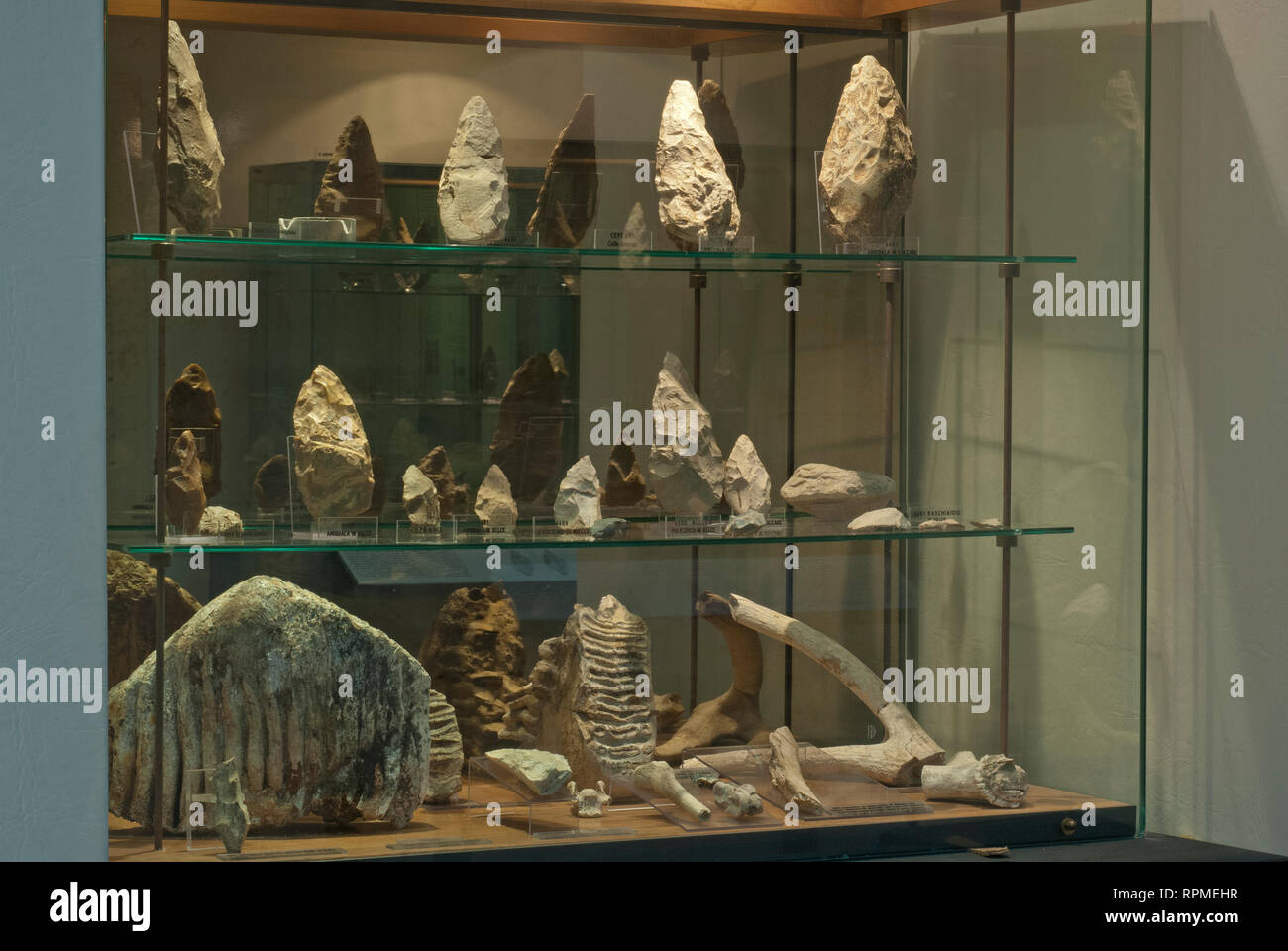 Prehistoric tools and remains of fossil animals, Prehistoric Museum of Pofi, Lazio, Italy - Stock Image