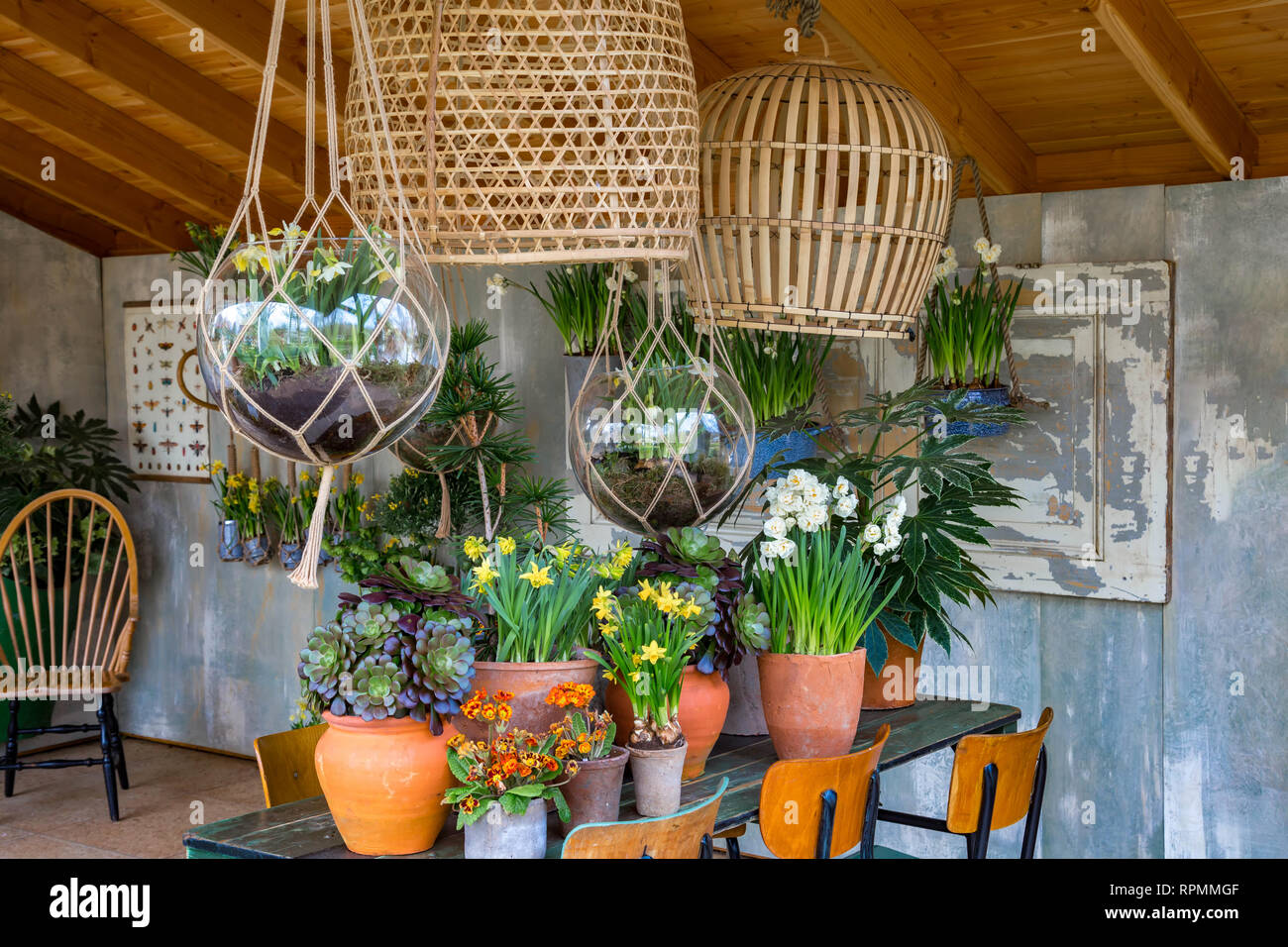 Decoration: Several spring plants in clay pots on a table ...