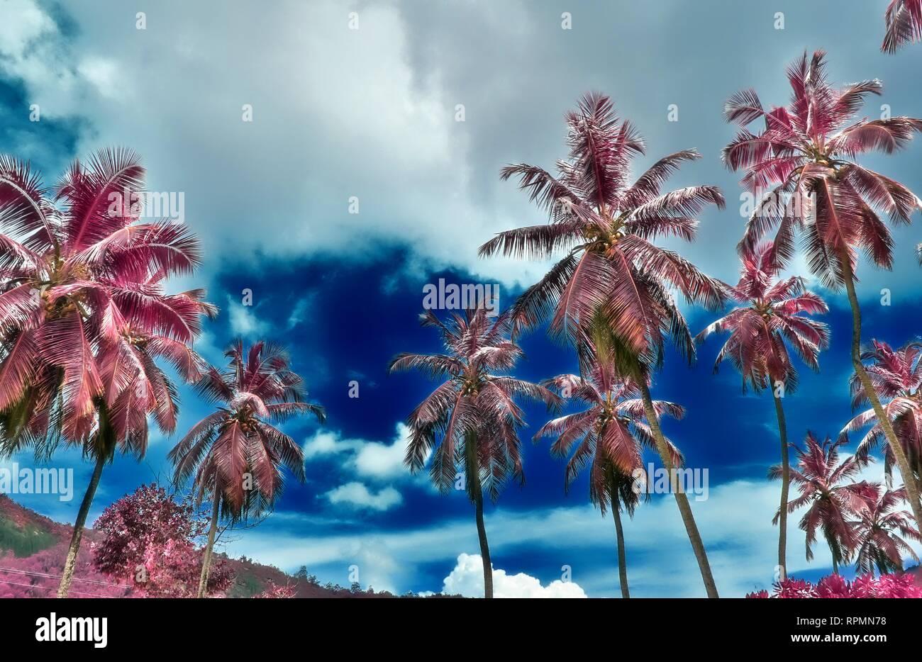 Beautiful infrared shot of palm trees on the paradise island Seychelles Stock Photo