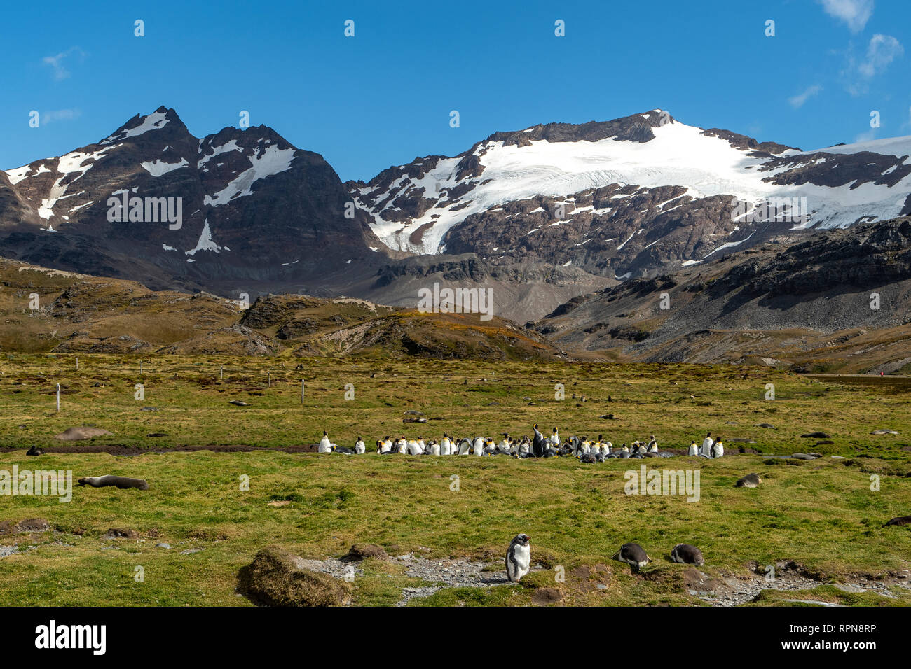 Shackleton Valley at Stromness Harbour, South Georgia Stock Photo