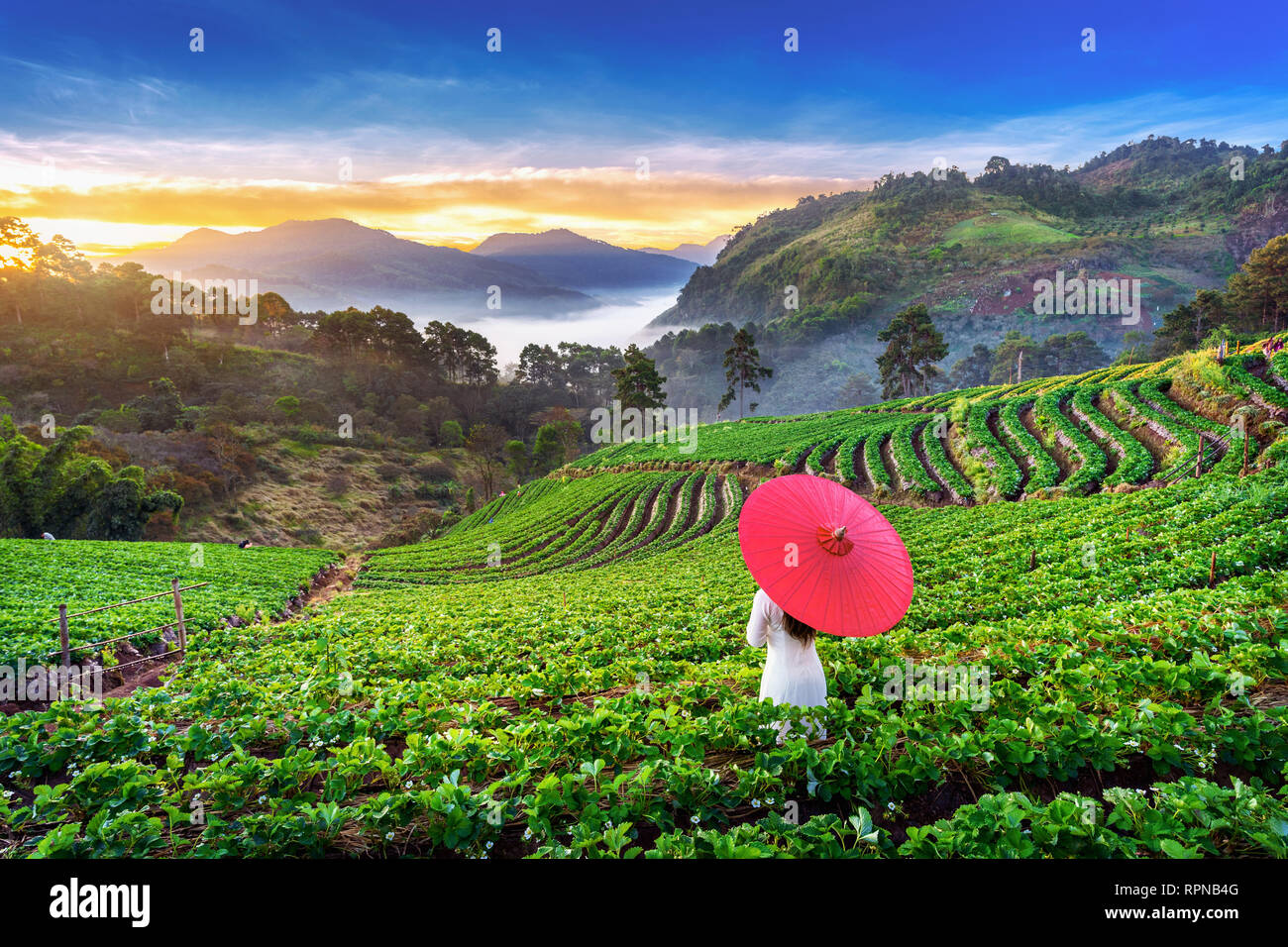 Asian Woman Wearing Vietnam Culture Traditional In Strawberry Garden On Doi Ang Khang Chiang Mai Thailand Stock Photo Alamy