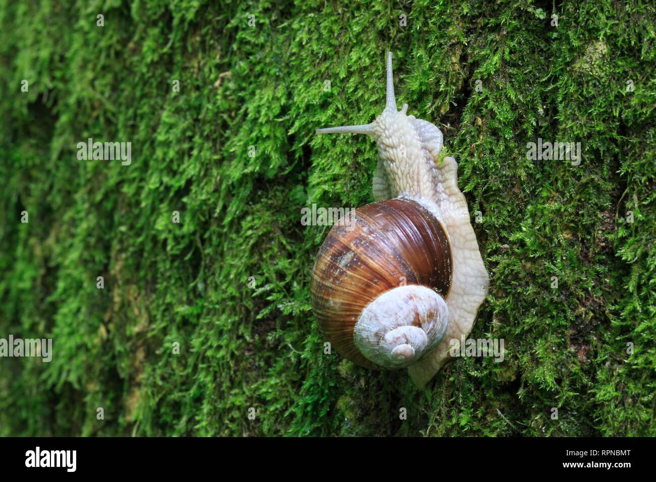 Escargot Snail Stock Photos & Escargot Snail Stock Images - Alamy