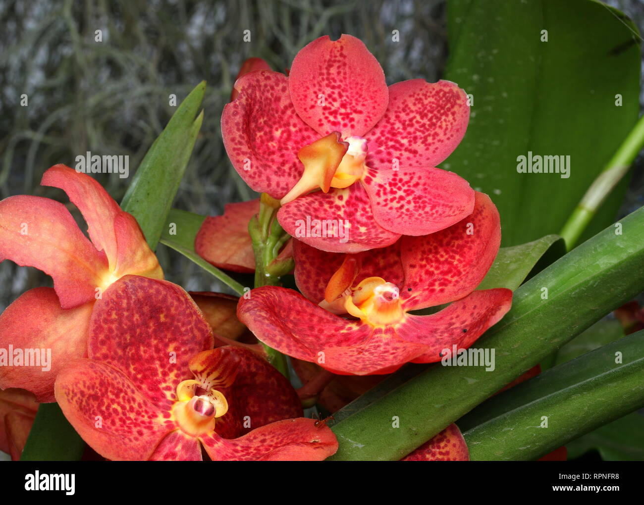 K K Orchids One Of The Quality Orchids Distributor In Sri Lanka