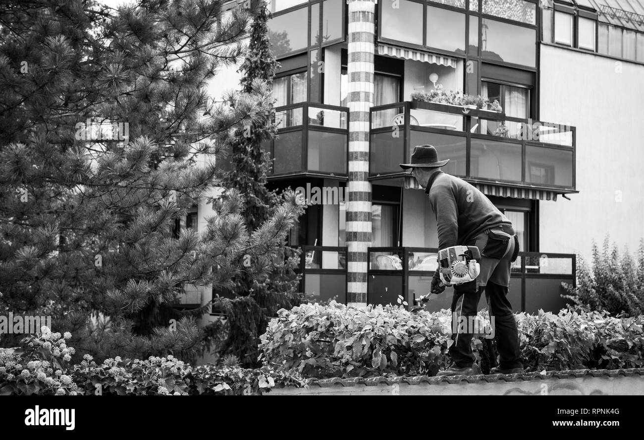 Black and white iamge of unrecognizable gardnere gardener cutting bushes and tree using his electric saws - Stock Image