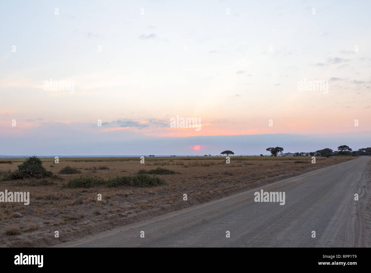 The road in the evening savannah. Kenya, Africa - Stock Image