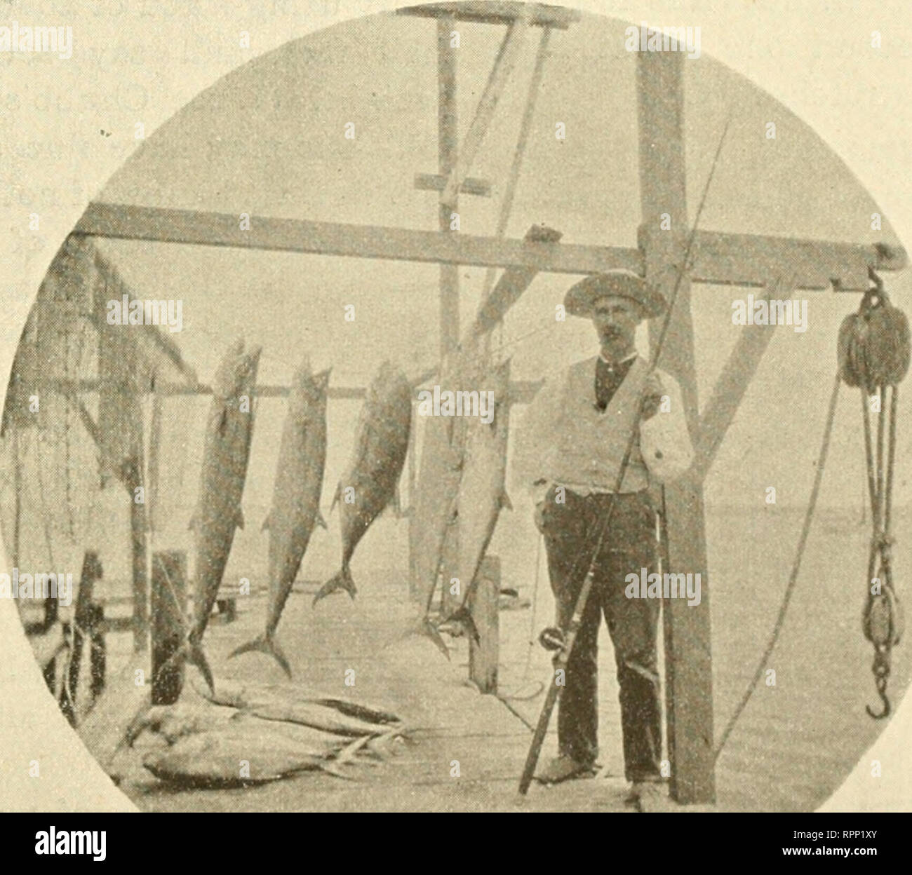 """. The American angler. Fishing. A Pkasant Little (laine at Aransas Pass. 347 and fig'litaia.g'; and indeed, had he the jumping' inclinations of the tarpon when the hook is felt, the sport would be pref- erable to that of the sulking- tarpon. And such a bolt of shining iridescence, the dark green lining of the back form- ing a beautiful contrast to the changing rainbow colors of the sides! Early one morning in Jul}"""", I was awakened by mine host of the Seaside calling out in a loud voice: ''Mr. J , Mr. J , better get up; the pass is full of king and jack- fish; Ned and Joe have been out and - Stock Image"""