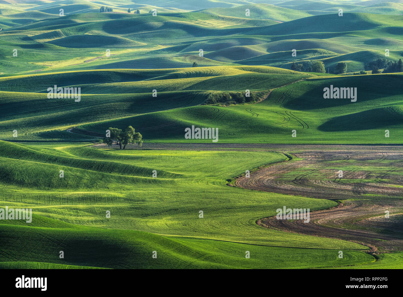 Spring is a favorite time to photograph the Palouse in Eastern Washington. The wildflowers are out on Steptoe Butte. All of the fields are lush and gr - Stock Image