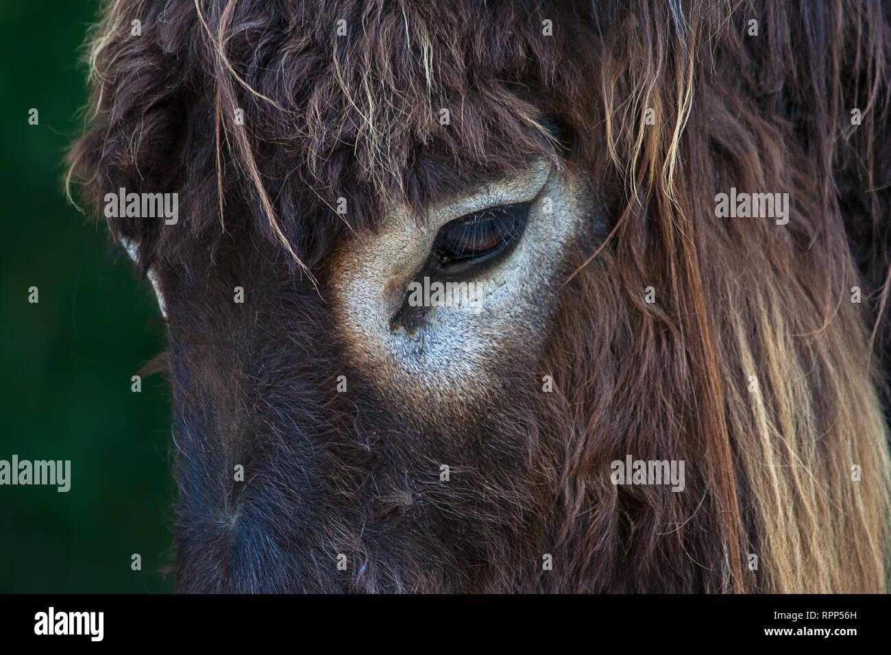 close up donkey's eye - Stock Image