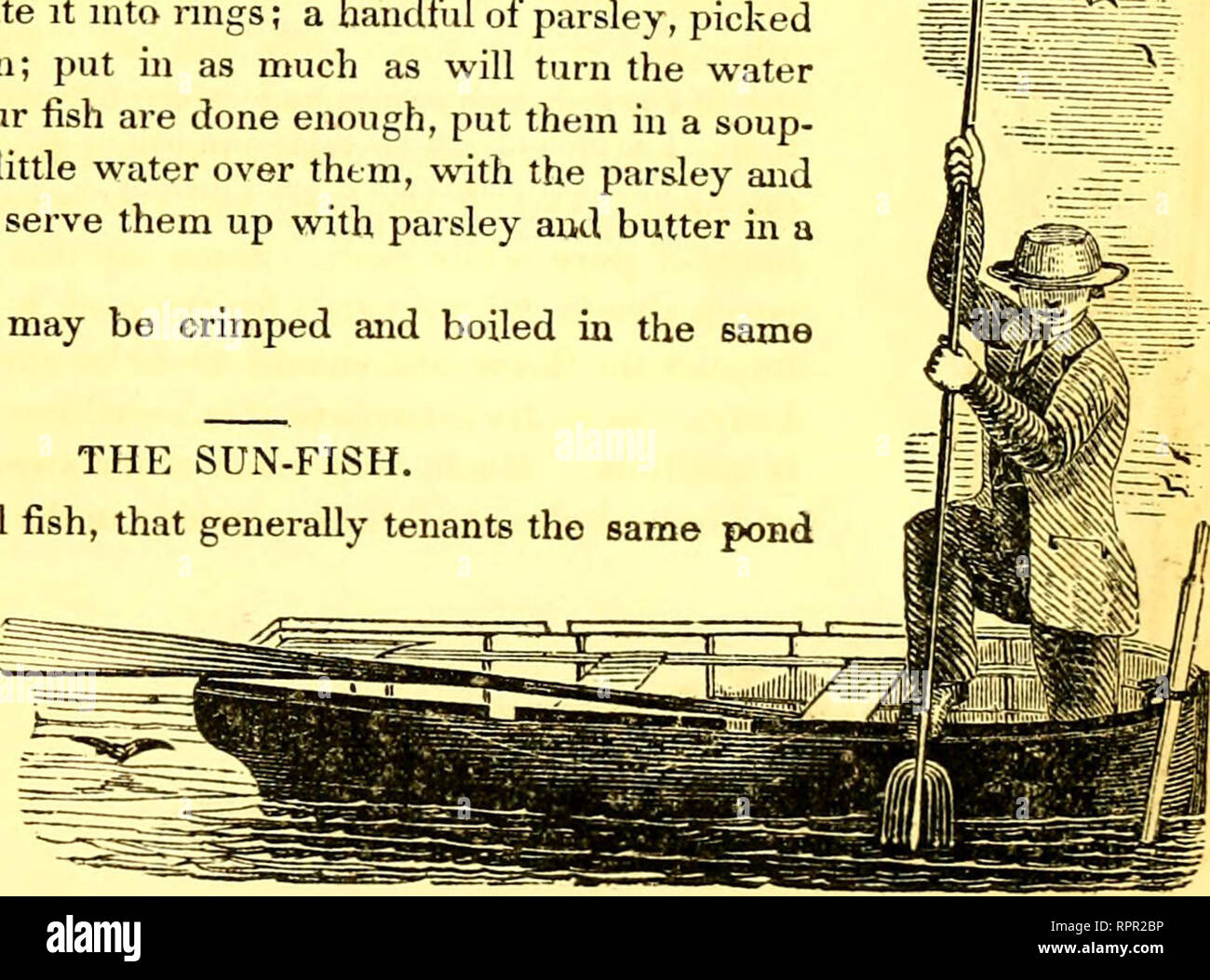 """. American angler's guide : or, complete fisher's manual, for the United States: containing the opinions and practices of experienced anglers of both hemispheres ; with the addition of a second part.. Fishing. THE SUN-FISH. 149 never be parted with except for some special reason, there- fore as a general thing, I scale my perch. But, in summer, the skin of the percli is apt to acquire a slight bitter taste, or a smack of the mud—therefore, in summer I skin my perch."""" """" Of the Gastronomic Properties of the Perch,"""" says Blaine, """" whoever has heard of the broiled perch flitche - Stock Image"""