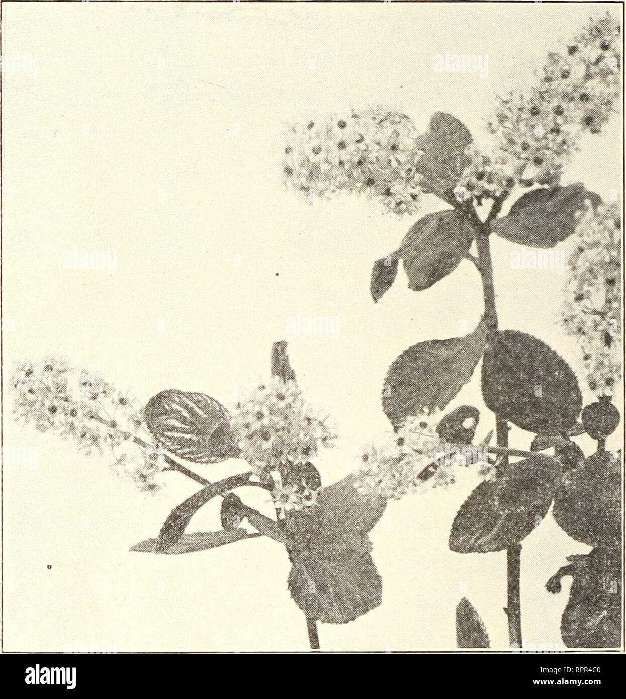 The American botanist : a monthly journal for the plant lover