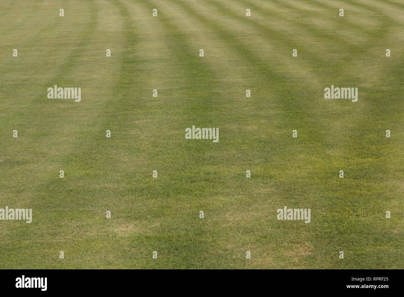 Dubai-Al Barsha Pond Park cut grass Stock Photo