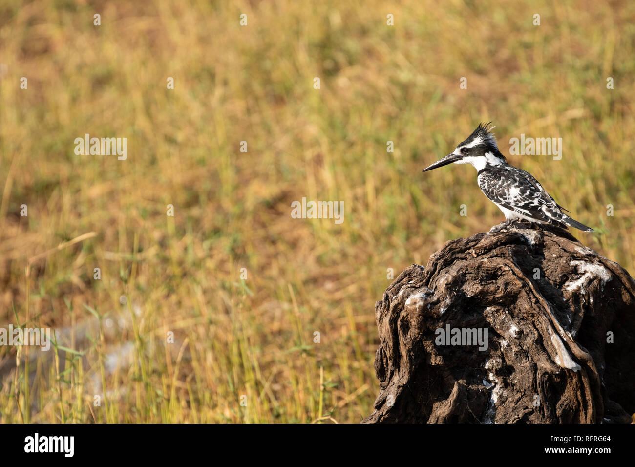 Chobe National Park in Botswana - Stock Image
