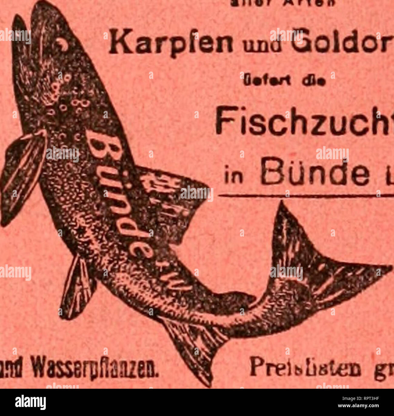 . Allgemeine Fischerei-Zeitung. Beste Forellen Eier, Brut und Setzlinge • Mar Arten CS U § a < Karpfen und Qoldorfen Fischzucht in Bünde l w.. Please note that these images are extracted from scanned page images that may have been digitally enhanced for readability - coloration and appearance of these illustrations may not perfectly resemble the original work.. München [etc. ] Landesfischereiverband Bayern [e - Stock Image