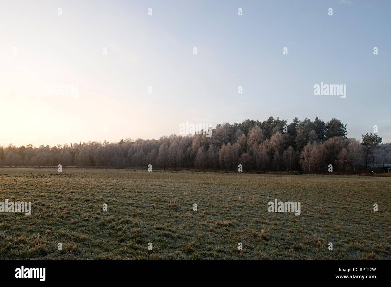 SWEDEN, Fog is a visible aerosol consisting of tiny water droplets or ice crystals suspended in the air at or near the Earth's surface.[1] Fog can be - Stock Image