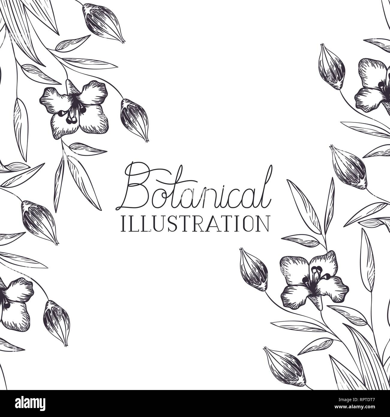 botanical illustration label with plants - Stock Vector