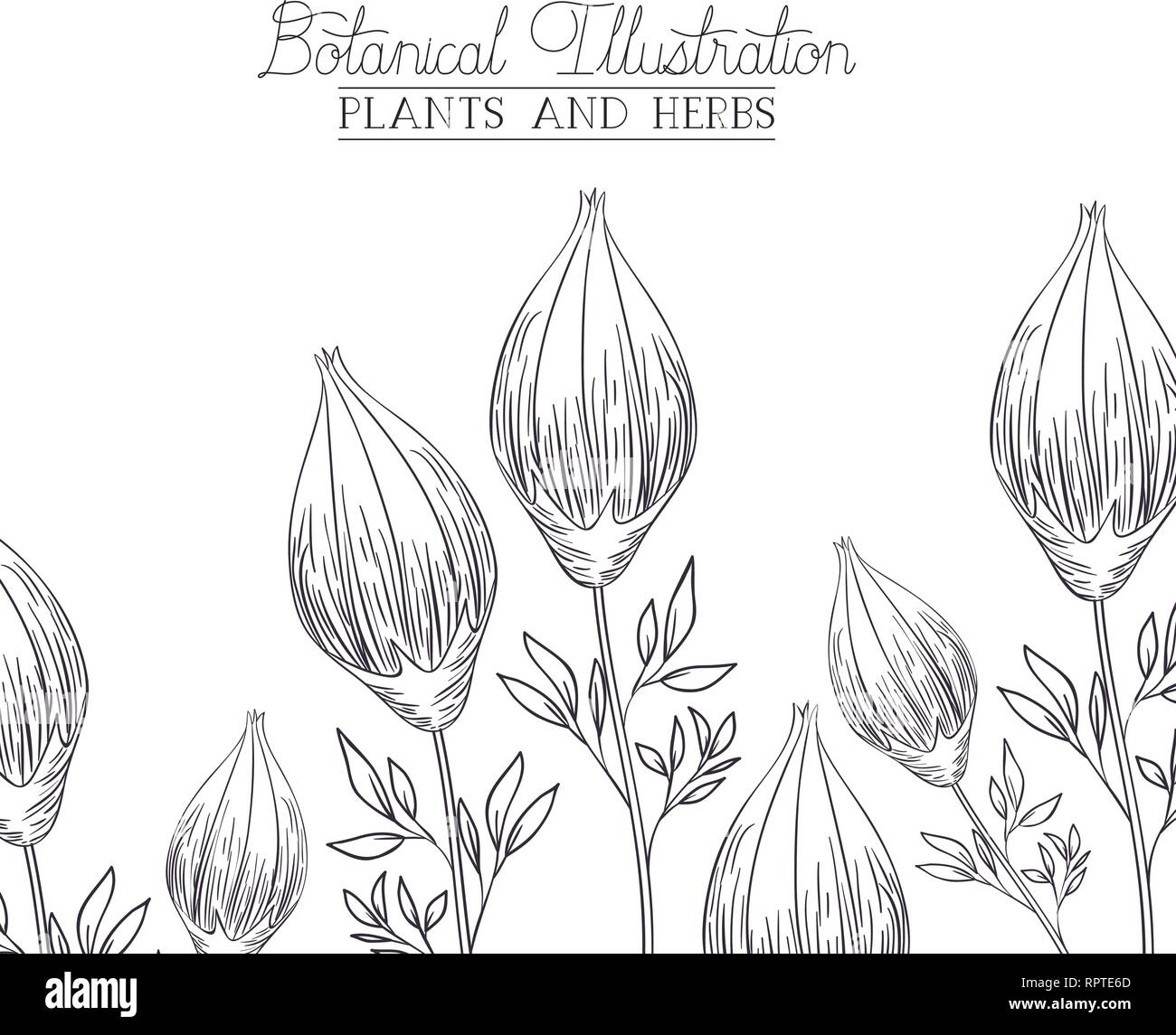 botanical illustration label with plants and herbs - Stock Vector