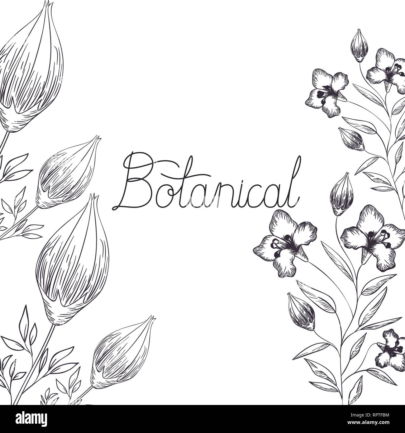 botanical label with plants isolated icon - Stock Vector