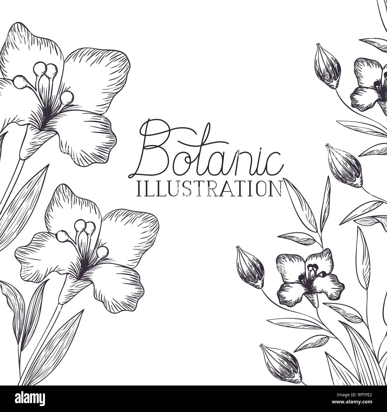 botanic illustration label with plants - Stock Vector