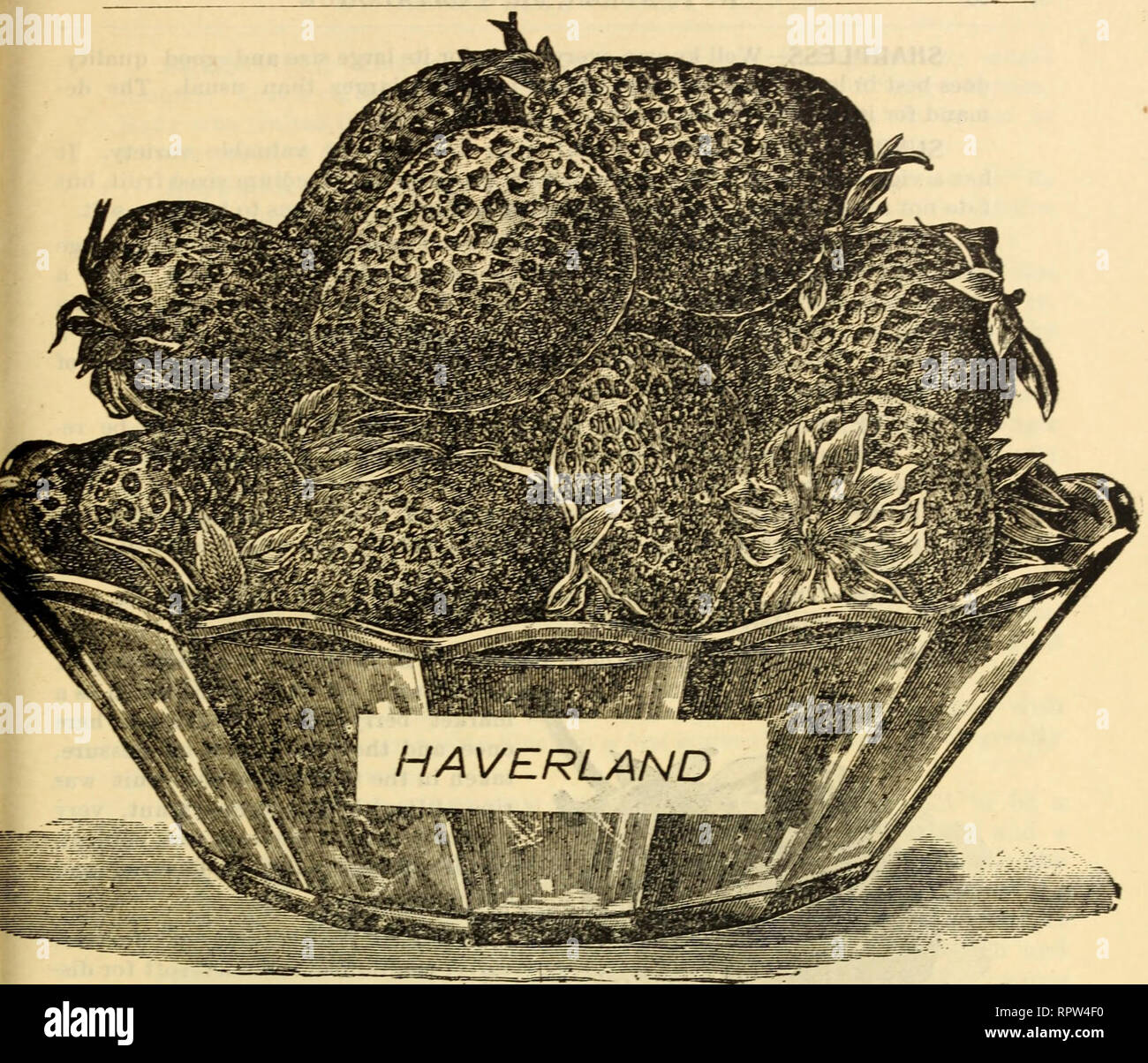 Allen's strawberry catalogue  Nurseries (Horticulture