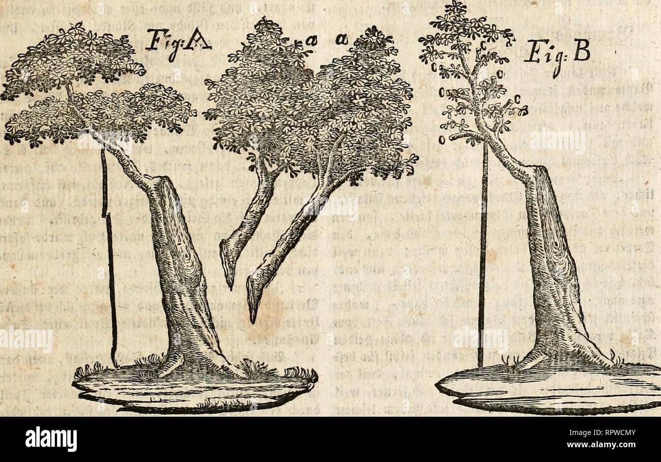 . Allgemeine deutsche Garten-Zeitung. Gardening -- Germany; Horticulture -- Germany. 359 nitv ntä) bit fd^lüädjpe fle|)cn Uui, iticcljten tuo^I ?oidt Saiimfreuiibe bit .^cffnung aufgegeben ^abcn, titn ferner Jit erl)a(tcn. 2)er »crige fd;cne «ßaum (jlid> nun »öClig einem uerflüminelten ©tarainc, bem man auf feinen bifen <Slot ein »erljältnifimäfig grcßeö Sau'ig aufgepfropft l;ättc. (St befam bie ©e; jialt, iute fie t)ier 3-tg. A. gcjeid^net ijT:. Sie abt getrcdjenen teiben ©ipfel finb a. a. angebeutet.. 9?acl) einem njieber^clt angelegten 25erl'anbe, unb angeln-ad^ter Stiije, njeil fid;  Stock Photo