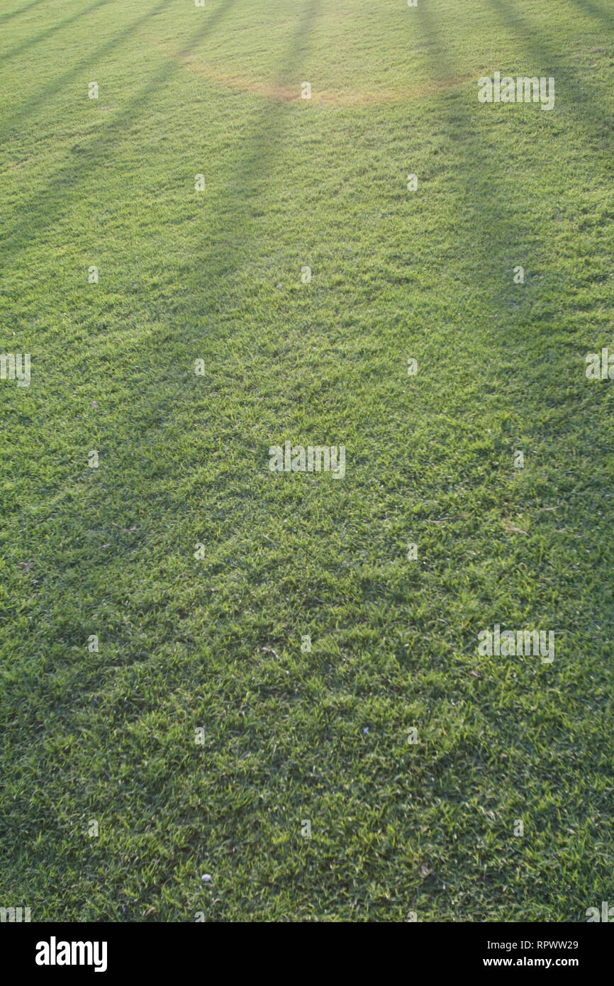 Dubai-Zabeel Park Cricket Ground grass Stock Photo
