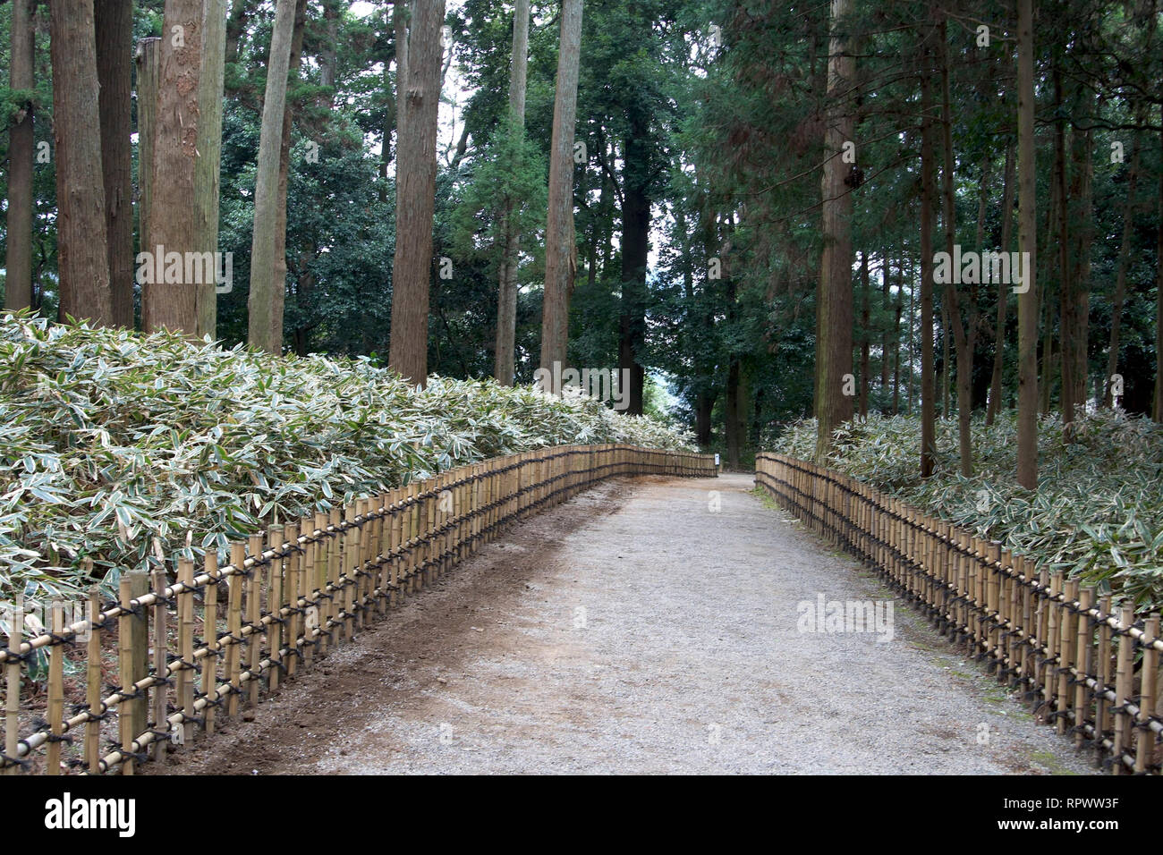Tall Bamboo Trees Stock Photos & Tall Bamboo Trees Stock