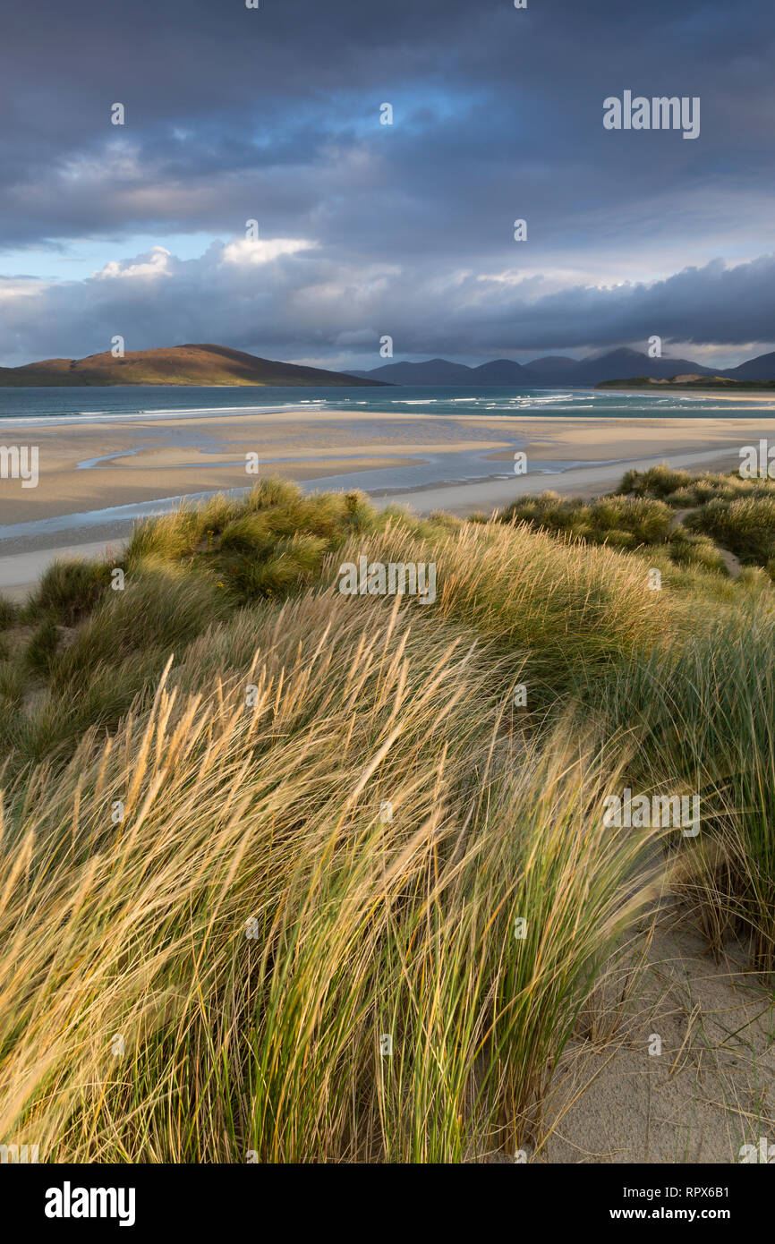 Grass on the dunes blowing in the wind at Seilebost, Isle of Harris, Outer Hebrides, Scotland - Stock Image
