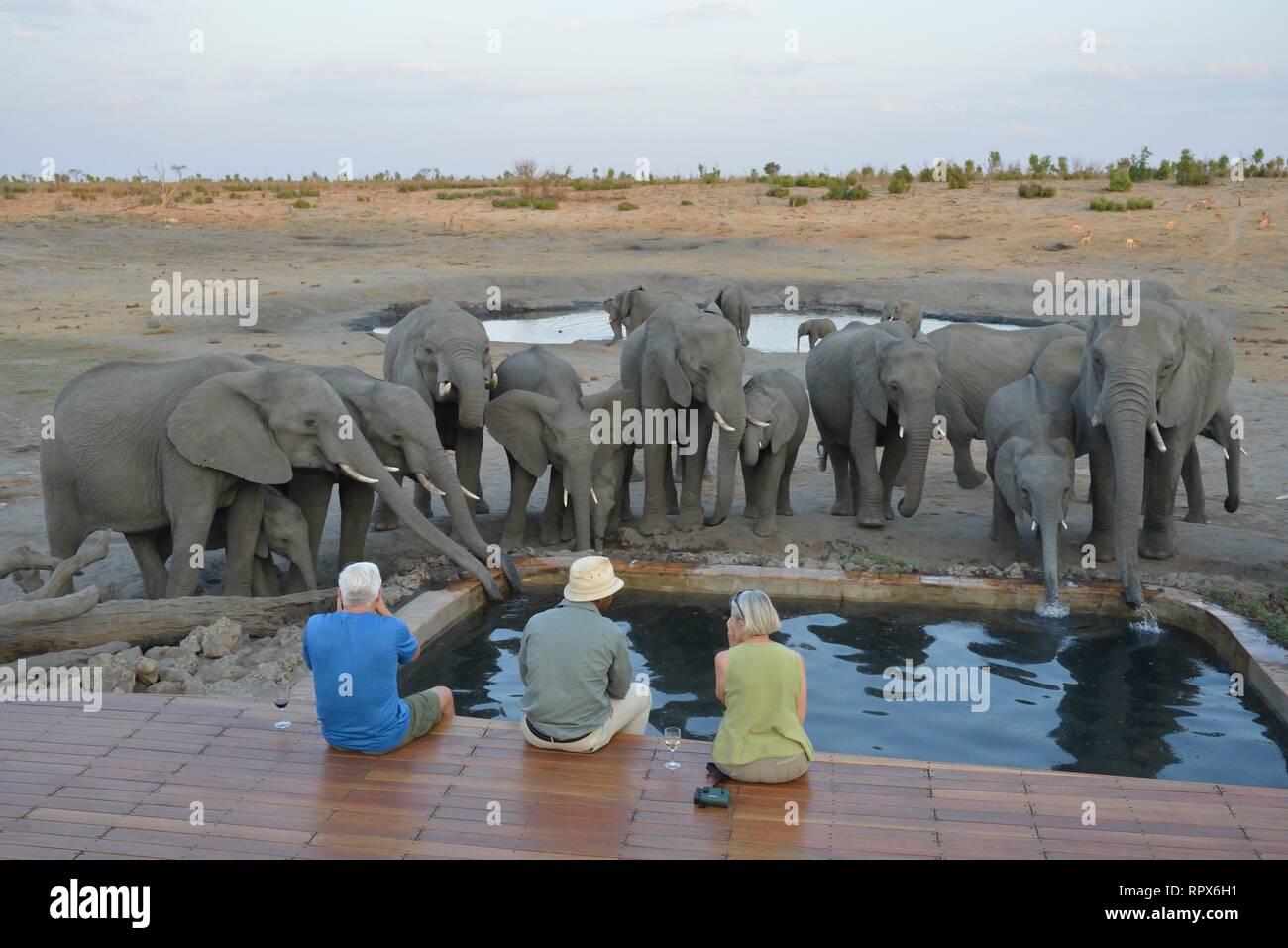 zoology, mammal (mammalia), tourists observe elephant (Loxodonta africana), Somalisa camp, Hwange Nati, Additional-Rights-Clearance-Info-Not-Available - Stock Image