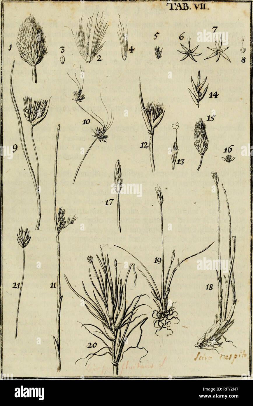 Agrostographia Sive Graminum Juncorum Cyperorum Cyperoidum