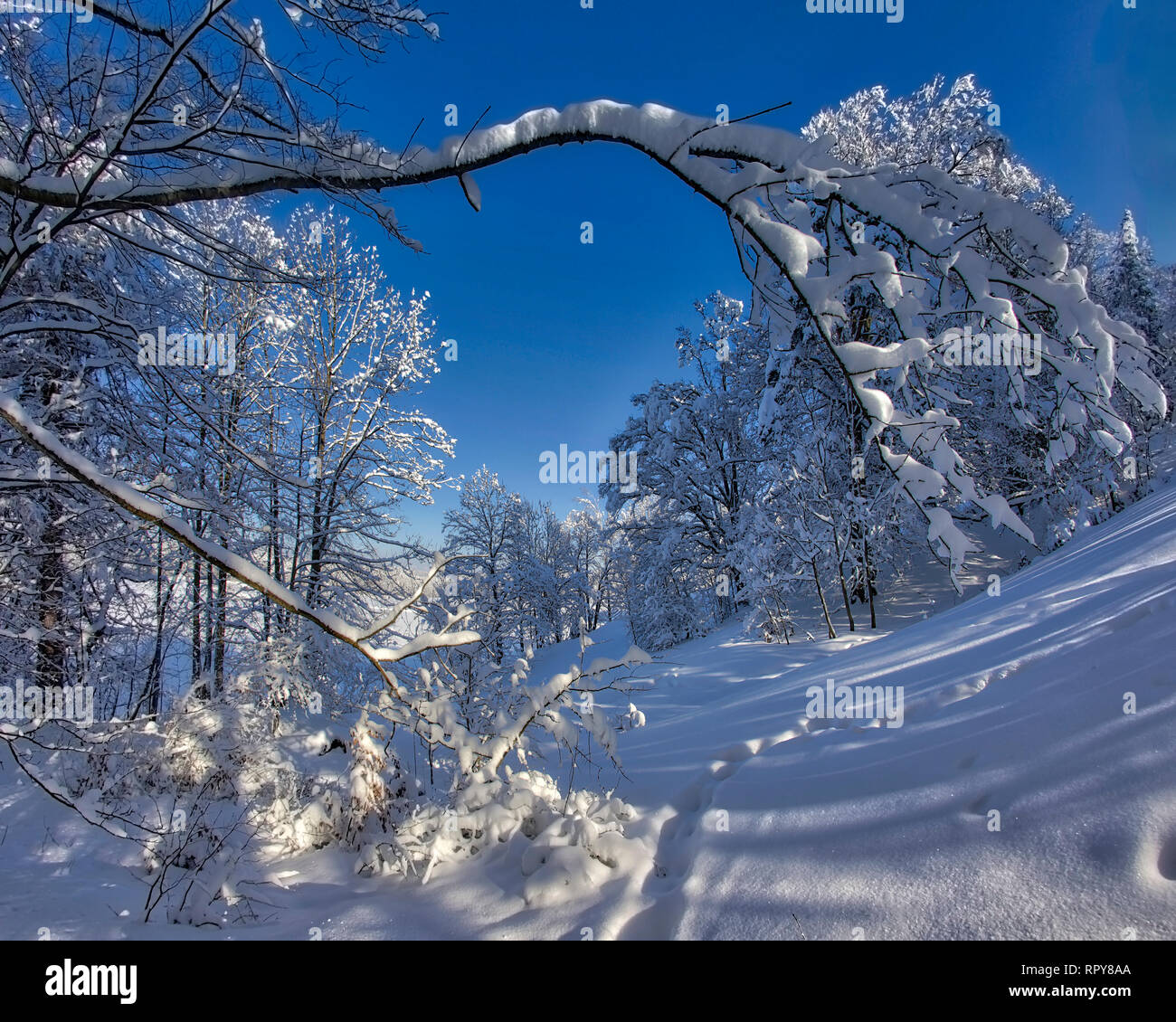 DE - BAVARIA: Winterscene on Kalvarienberg at Bad Tölz  (HDR-Image) Stock Photo