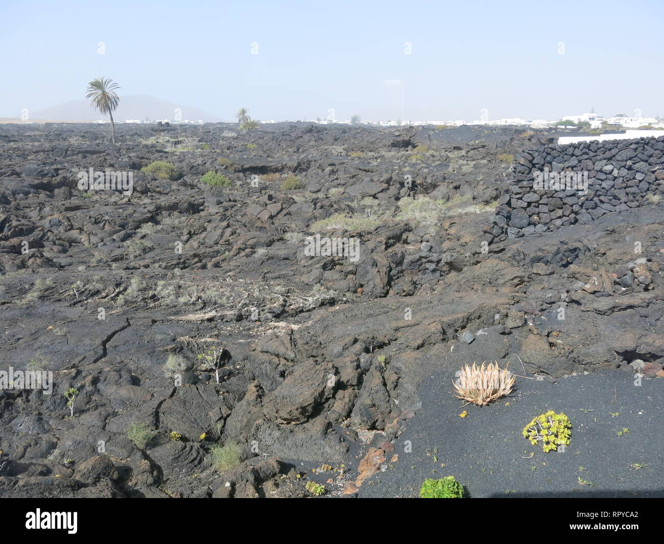 The landscape is bleak outside Cesar Manrique's former home in Lanzarote: rugged terrain made up of black volcanic lava and occasional vegetation - Stock Image