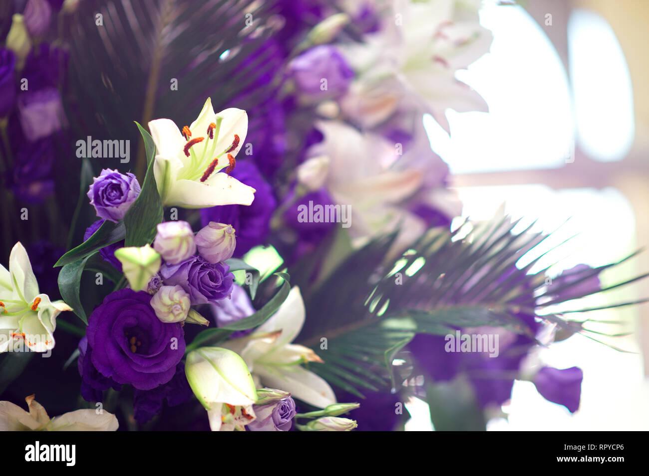 Beautiful violet eustoma bouqet - Stock Image