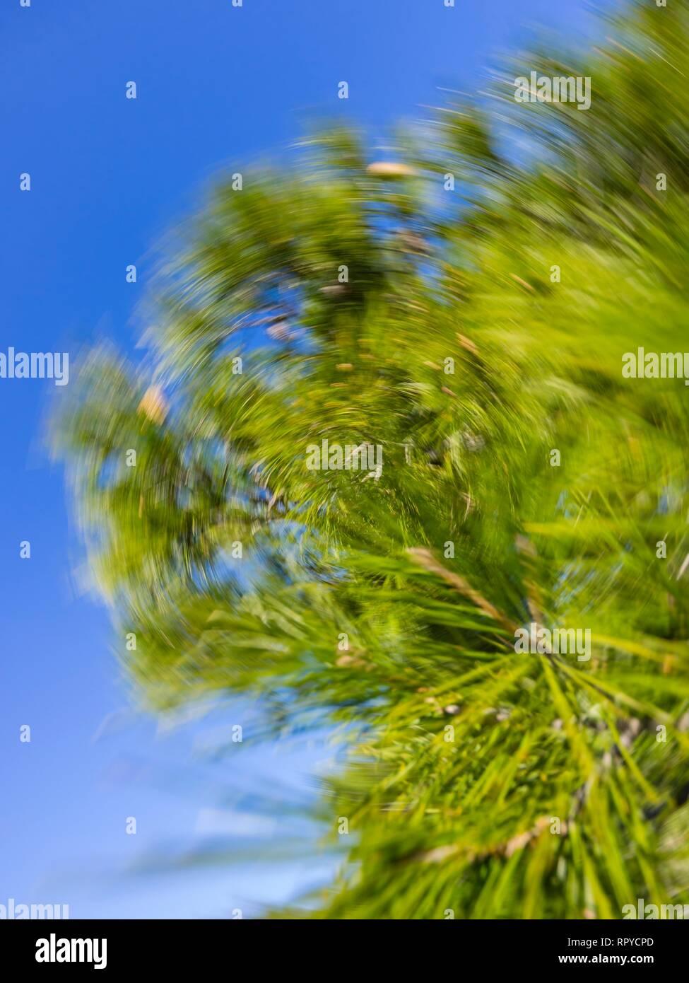 Green vegetation creative proto in rotative fashion - Stock Image