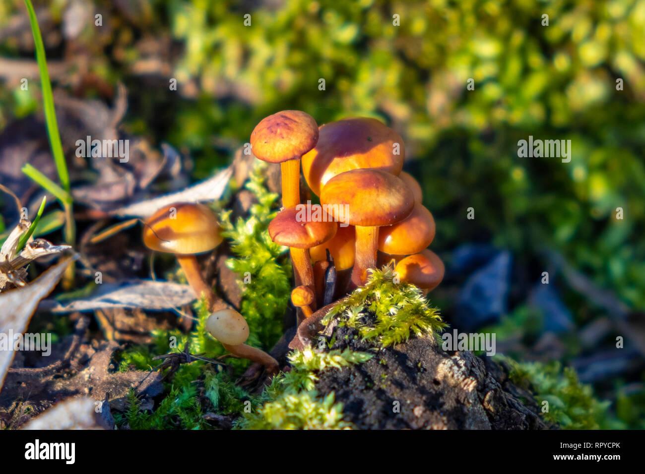 Nahaufnahme von Pilze und Pflanzen - Stock Image