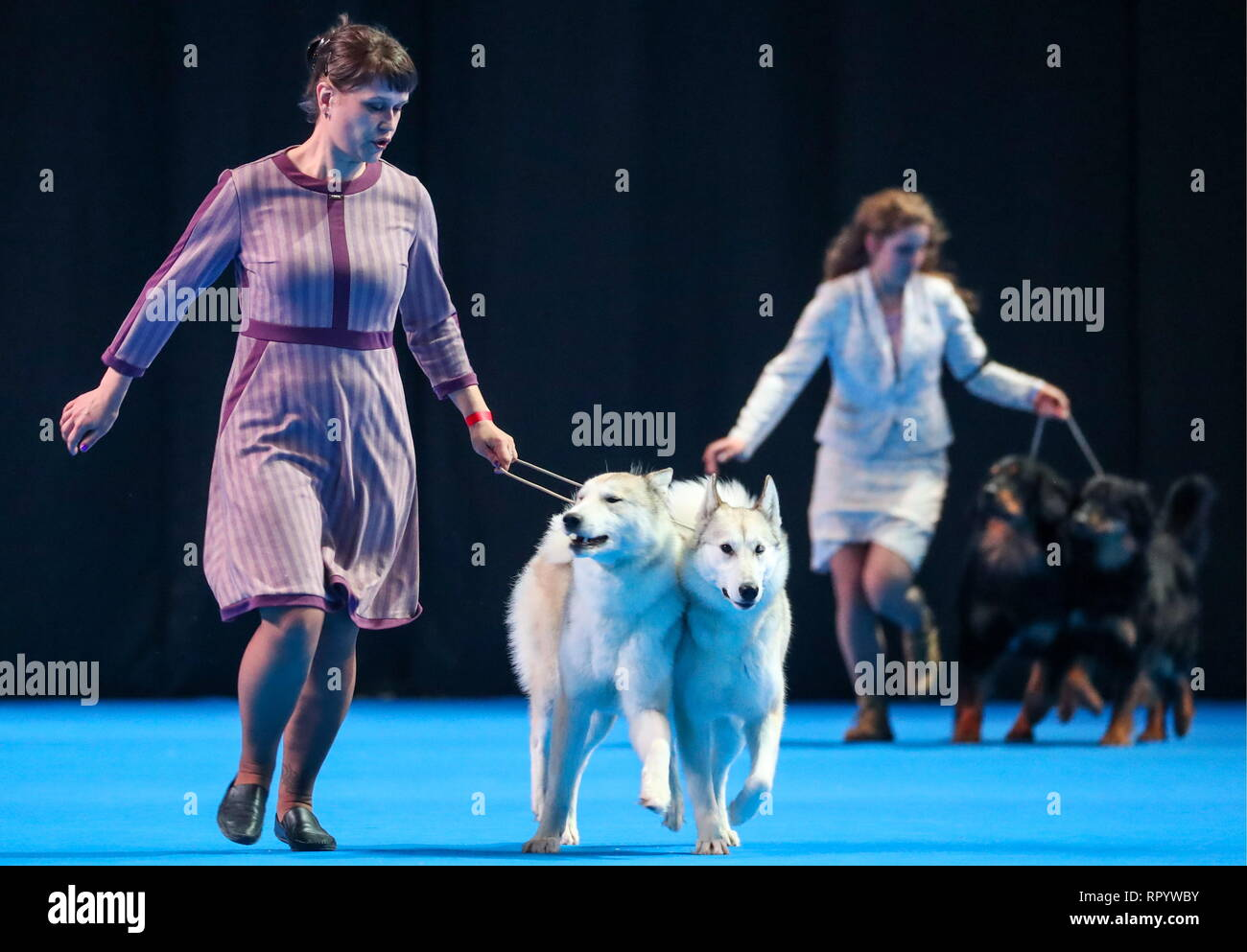 Dogs of the Laika breed take part in the Eurasia 2019