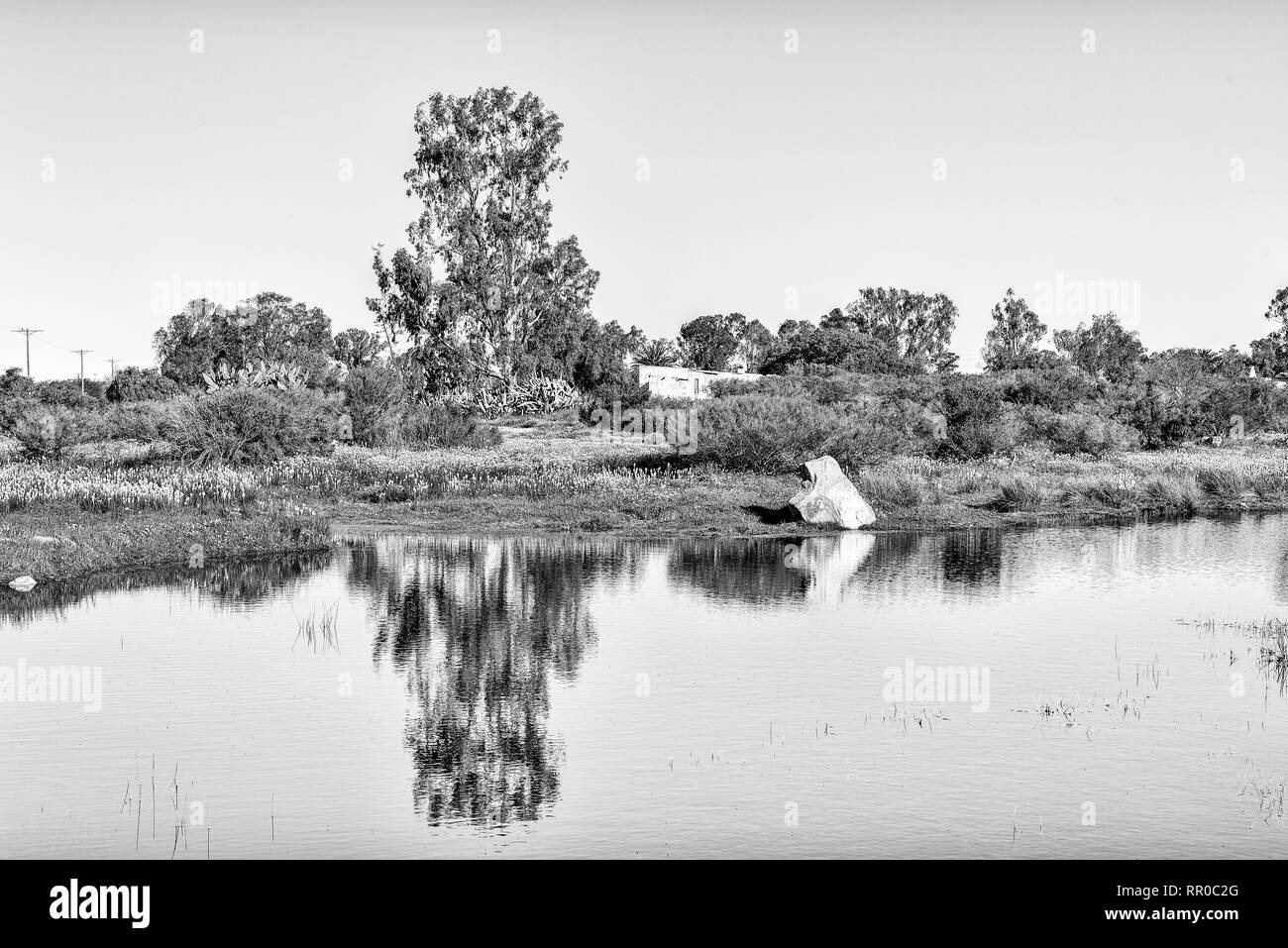 Reflections in a pond at Willemsrivier in the Northern Cape Province. Monochrome - Stock Image