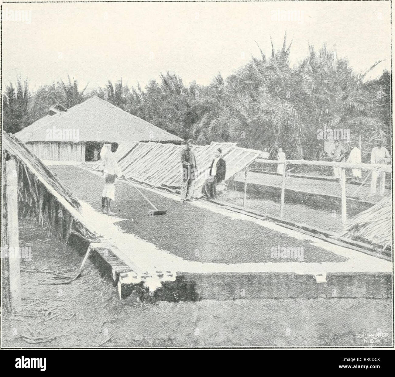 The Agricultural Gazette Of New South Wales Agriculture