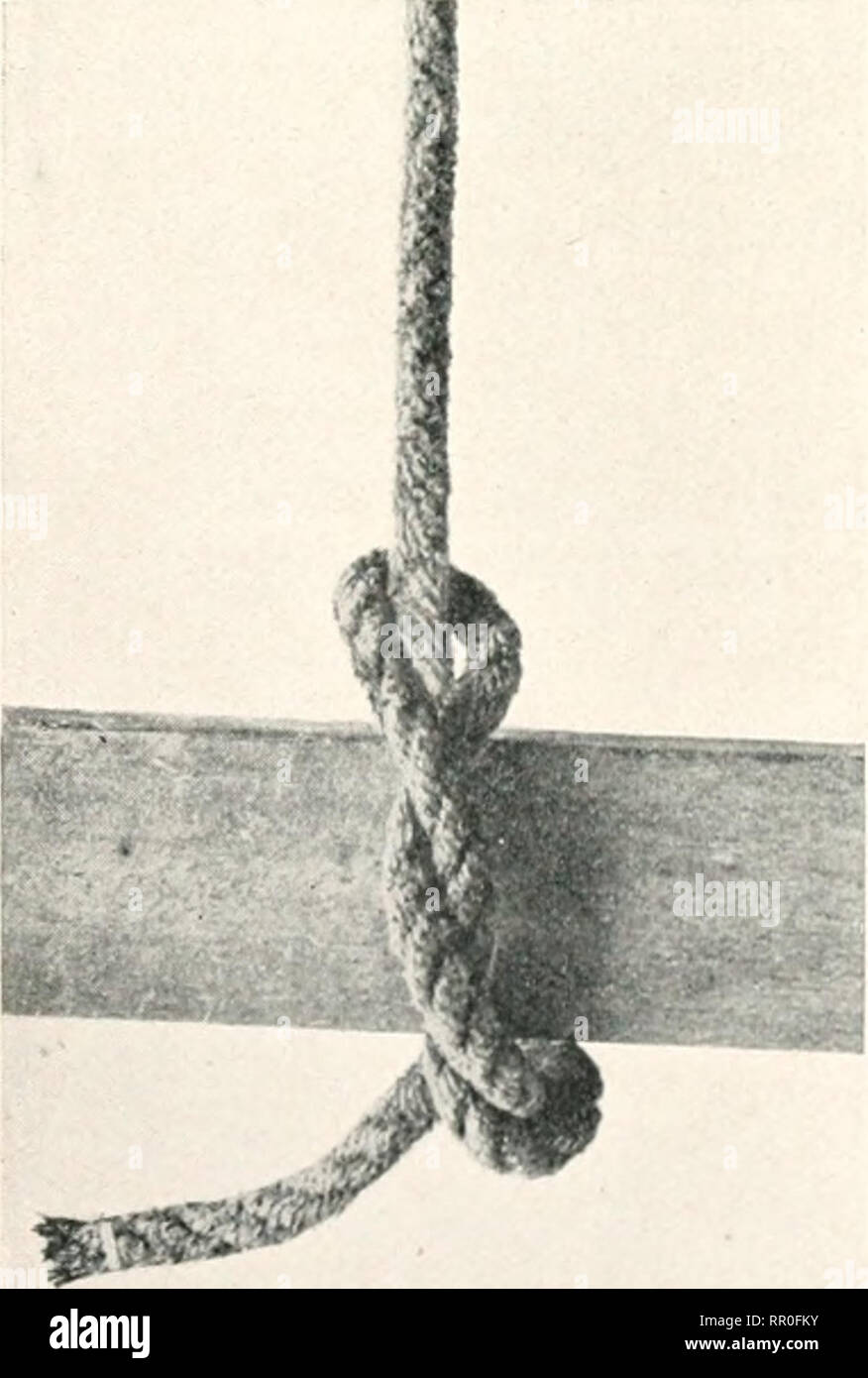 . The agricultural gazette of New South Wales. Agriculture; Agriculture -- Australia New South Wales. Fig. 5.—Clove hitch. stock. Jf a running loop is required, the running howline (Fig. 3) is a good form, as the loop vill not pinch on the rope and give trouble when in use. Tlie plain, herket, or sh^et l)end (Fig. 4), is anotlier useful knot for join- ing two ropes—especially when one end runs up to, and stops at, a puUey- hlock, there is no loose end to feed into the block and jainl) it. The clove hitch (Fig. -5) is also a useful knot for use with poles and guys. It will not slip in eitlxM-  - Stock Image