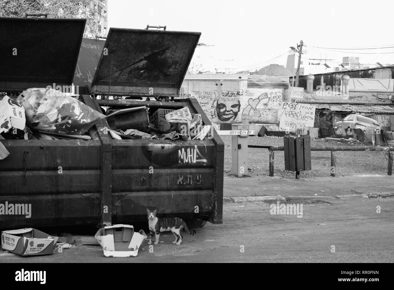 Curious cat in front of a garbage container- Tel Aviv, Israel - Stock Image