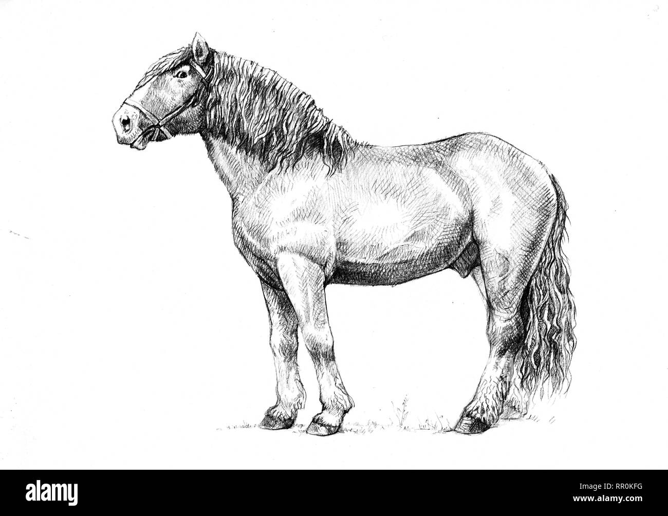 Draft Horse Illustration Horse Portrait Horse Pencil Drawing Stock Photo Alamy