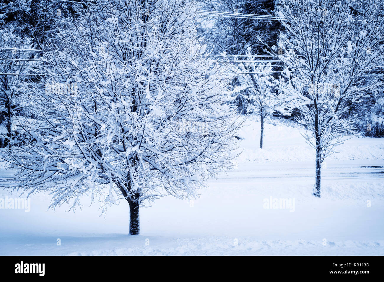 A Winter Storm Leaving Behind Fresh Snow Covered Trees Fields And Roads In Biddeford Maine Stock Photo Alamy