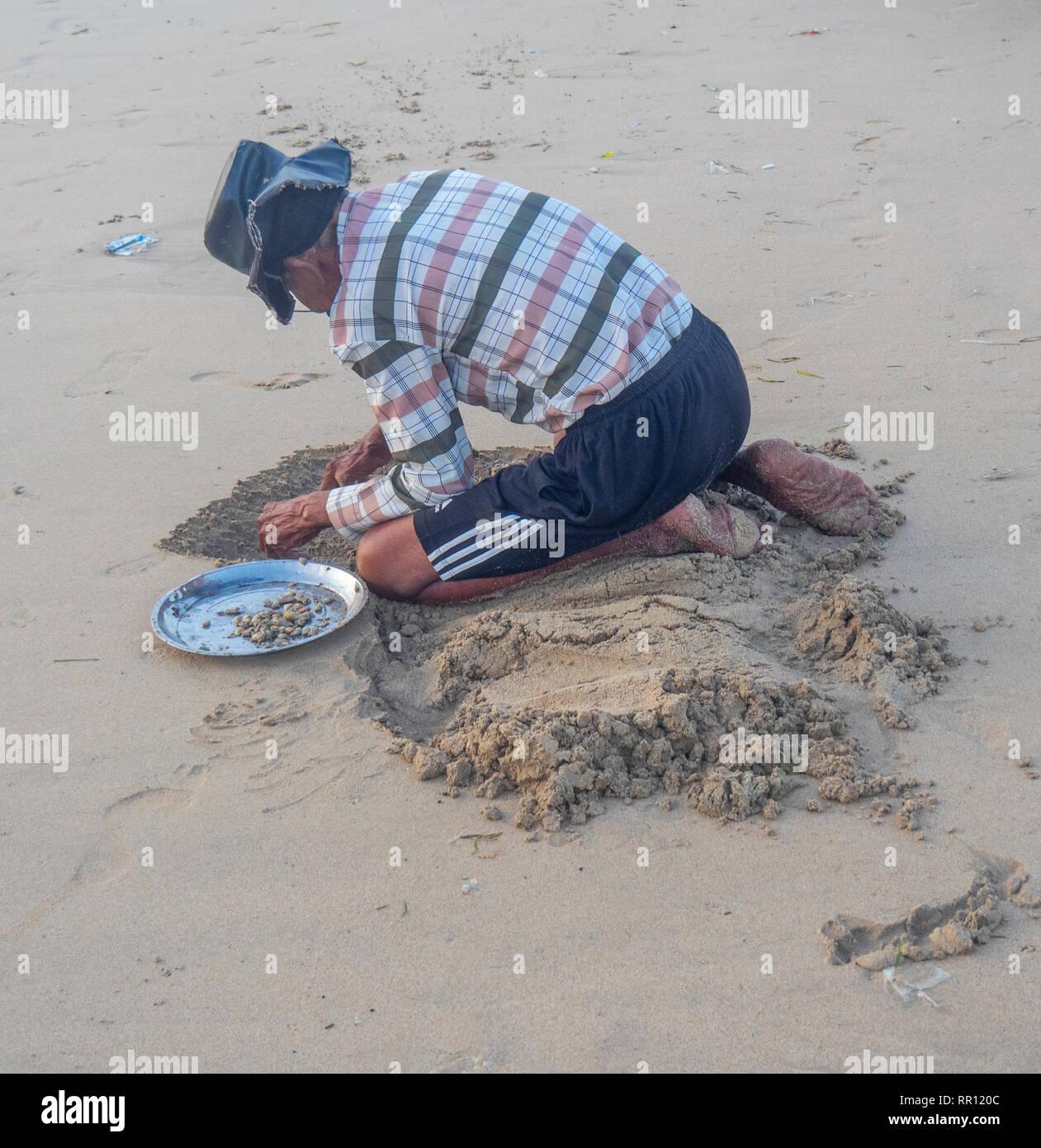 A man digging up beach sand to  collect cockle shells at the beach at Jimbaran Bay Bali Indonesia. - Stock Image