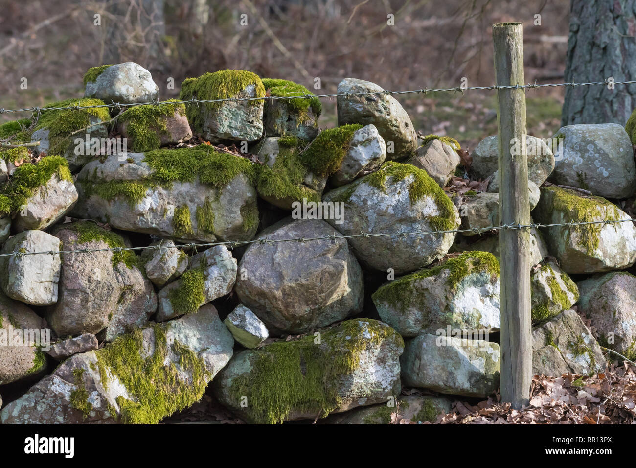 Traditional old mossy stone wall and barbed wire as a fence in a farmland - Stock Image