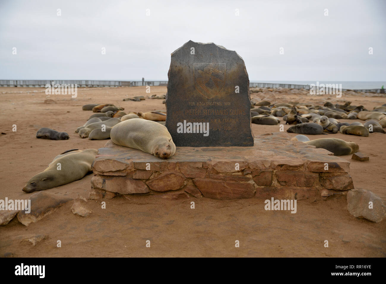 zoology, mammal (mammalia), South African sea bear (Arctocephalus pusillus), Cape Cross, cape cross, r, Additional-Rights-Clearance-Info-Not-Available - Stock Image