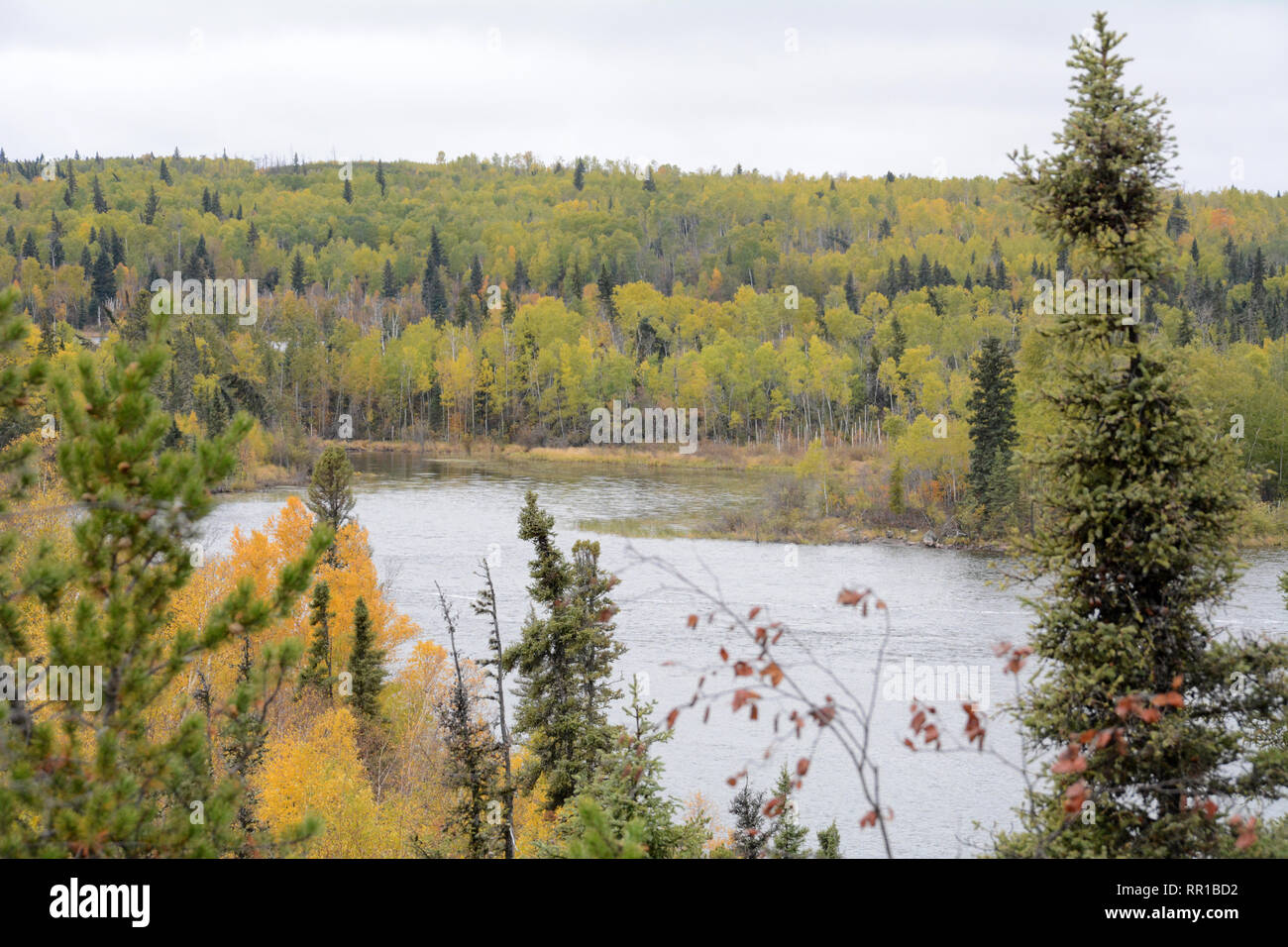 The autumn colours of the boreal forest on the shores of Otter Lake near the village of Missinipe in northern Saskatchewan, Canada.north - Stock Image
