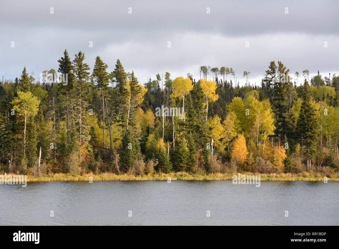 The autumn colours of the boreal forest on the shores of Otter Lake near the village of Missinipe in northern Saskatchewan, Canada. - Stock Image