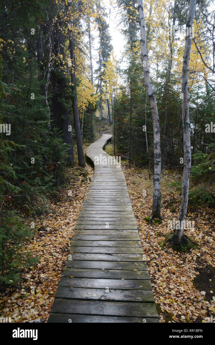 Boardwalk along a forest hiking trail, seen in autumn, in Prince Albert National Park, in northern Saskatchewan, Canada. - Stock Image