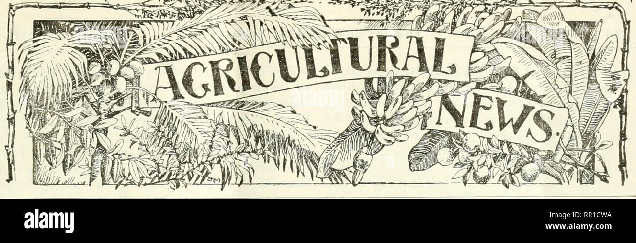 . Agricultural news. Agriculture -- West Indies; Plant diseases -- West Indies. A FORTNIGHTLY REVIEW OF THE IMPERIAL DEPARTMENT OF AGRICULTURE FOR THE WEST INDIES. LIBRA NEWY VoL X. N>. 21G. BARBADOS, SEPTEMBER 30, 1911. PlCICE Id, CONTENTS Fagk. Agricultiiial Training in Antigua 311 Agi-icultuie in the Philip- pine Islnnds 319 Cac;io Spraying Kxperi- inenl.s in Grenada ... 308 Ceara Rubber Tree, Method of Tapping... 311 Cotton Notes :— Contamination of Egypt- ianCotton 310 West Indian Cotton ... 310 Croj)-:, Water Require- ments of 300 Ficus Elastica L.itex, Co- agulation of 300 Fruit-Giow - Stock Image