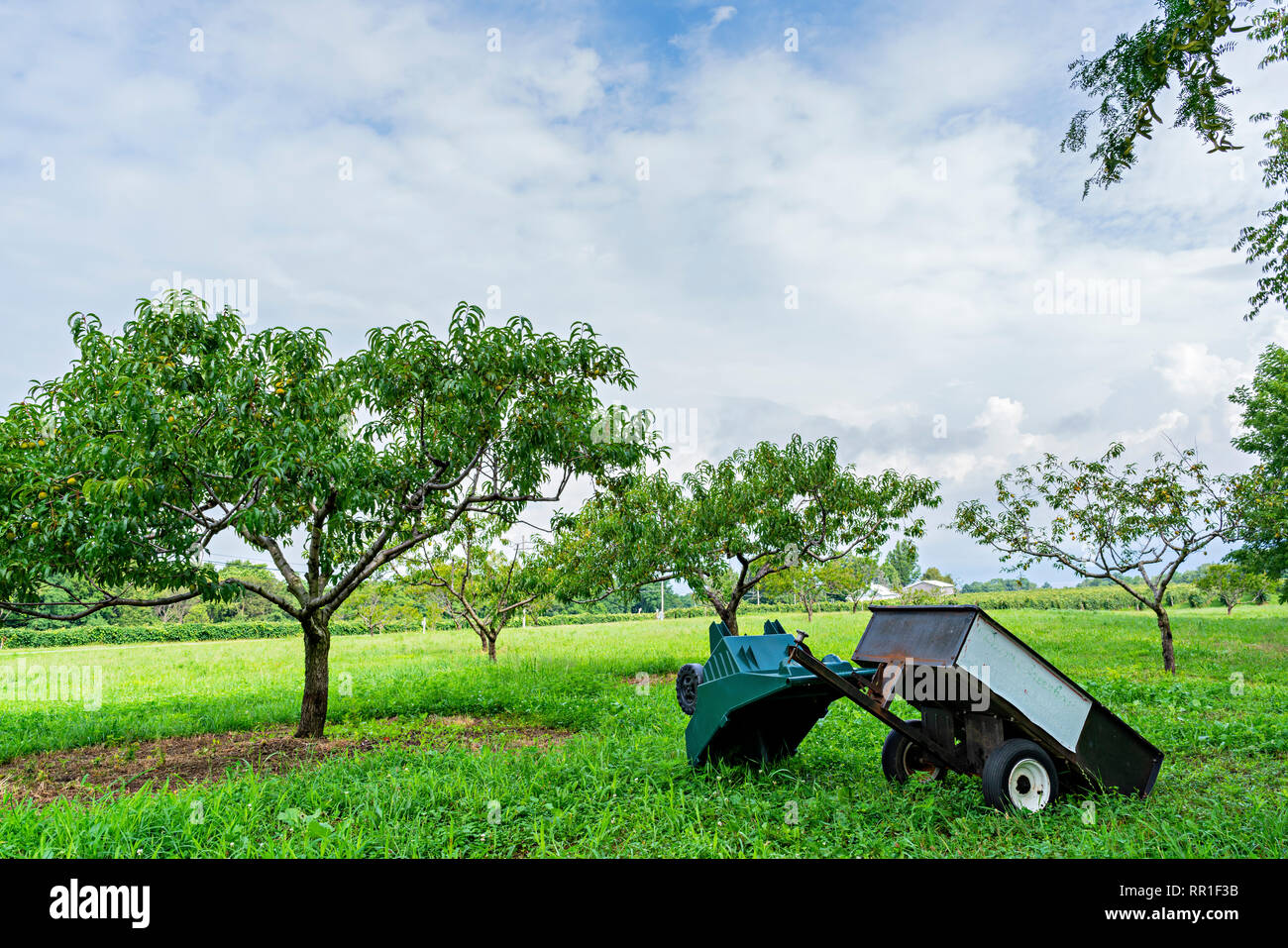 Green Farm With Orchard - Stock Image