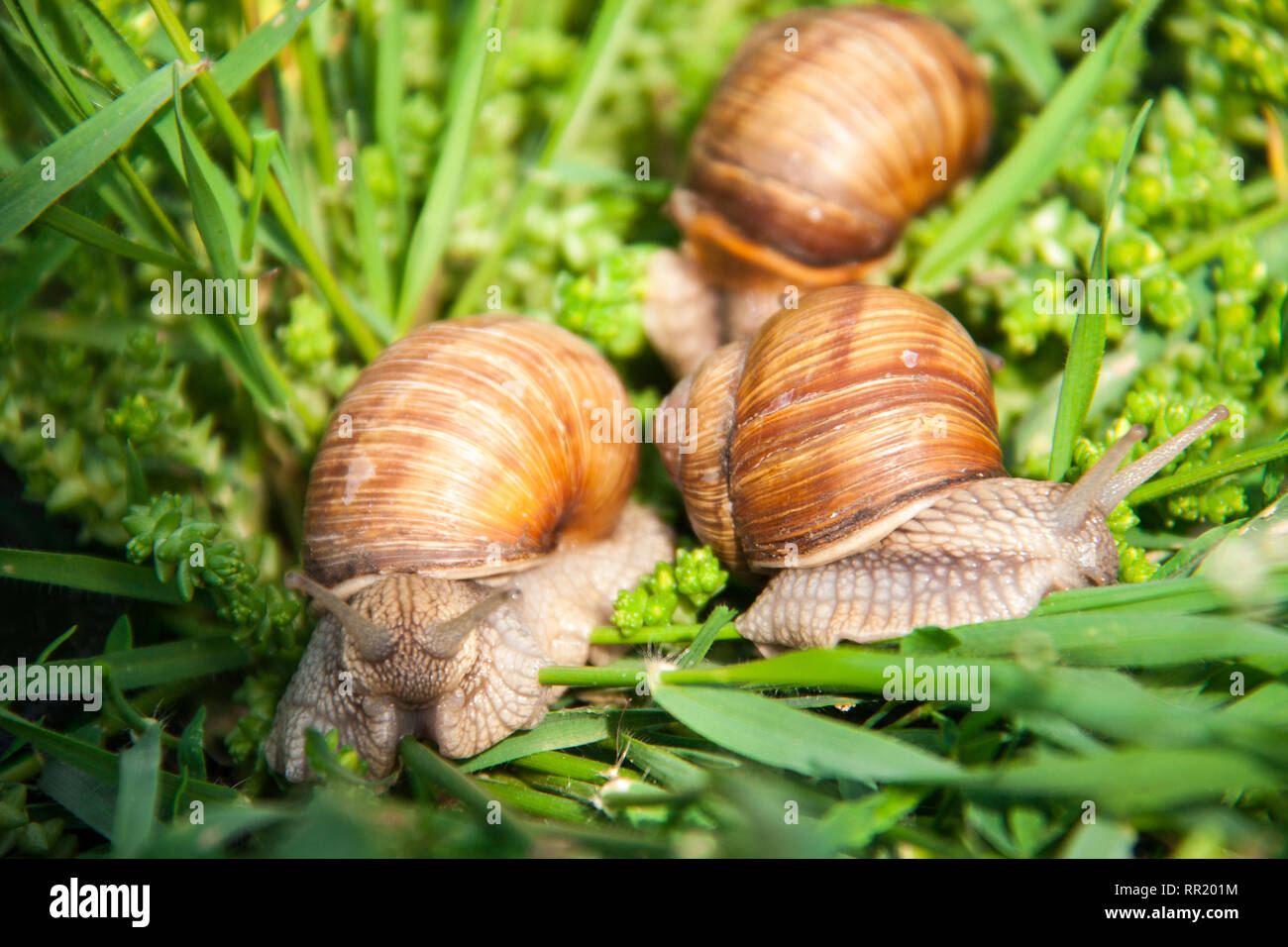 Slug Stock Photos & Slug Stock Images - Page 9 - Alamy